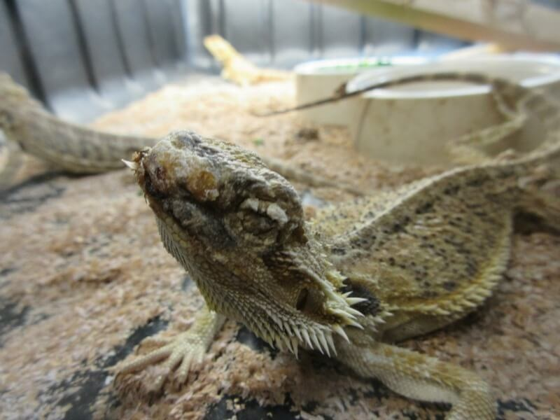 How Buying Reptiles For Sale Can Transform Your Existence