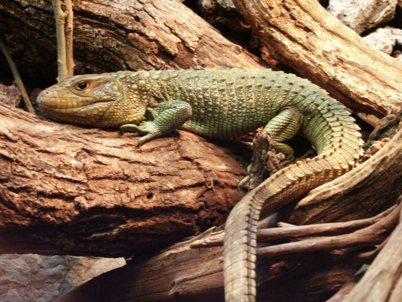 From Novice to Expert, Necessities Such As Two Best Reptiles For Sale