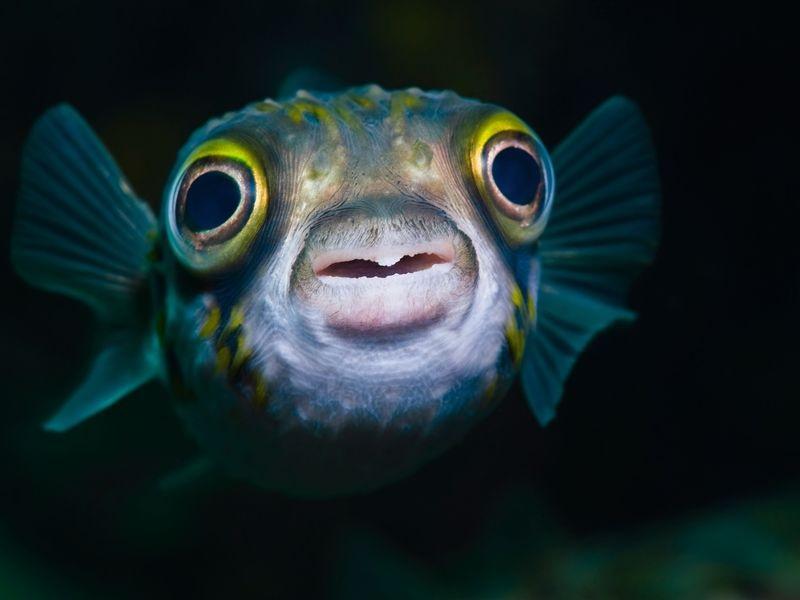 Ideas to setup Your Saltwater Aquarium