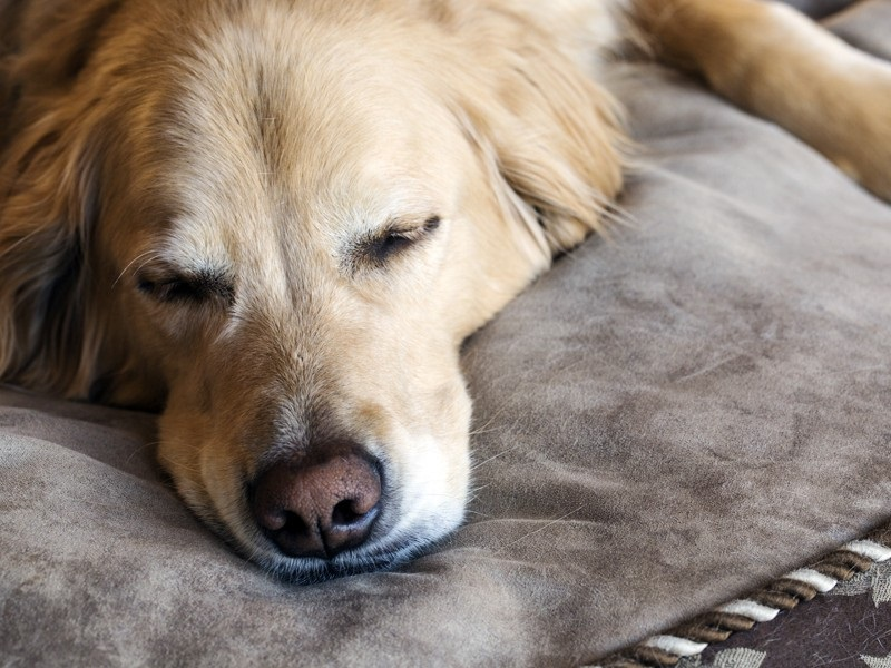Simple Things You Can Do To Boost Your Dogs Behavior