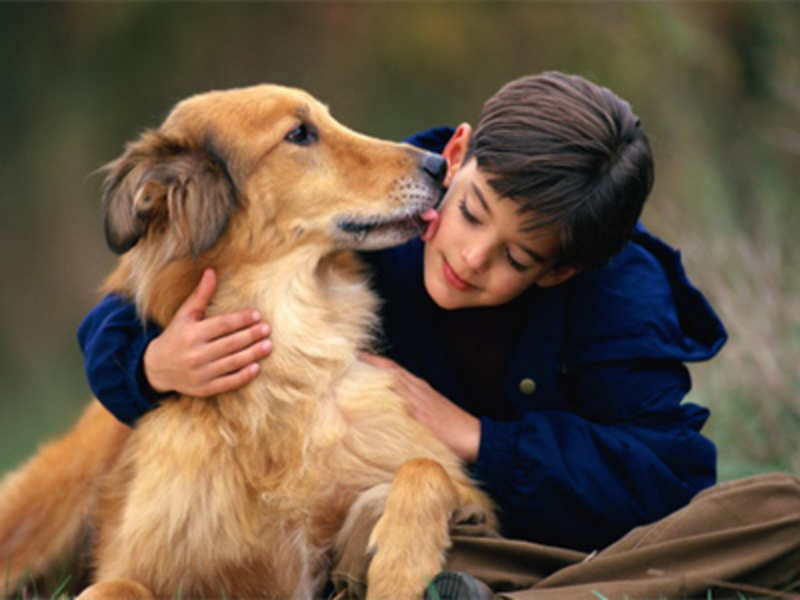Advantages Of Residential Dog Training