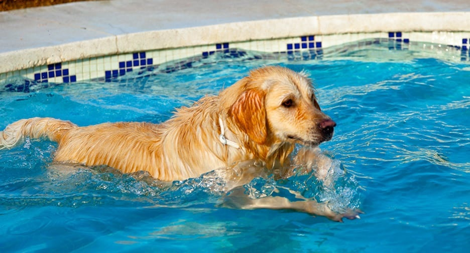Dog hydrotherapy Northampton – Go for the best