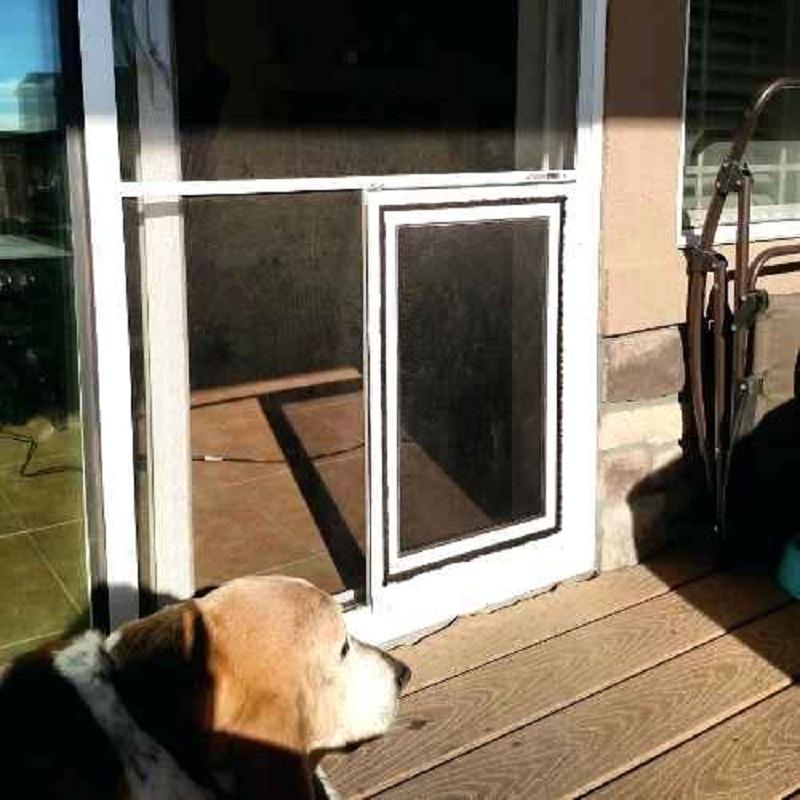The Benefits of a Doggy Door for Glass Door