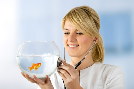 Antibiotic for your pet fish