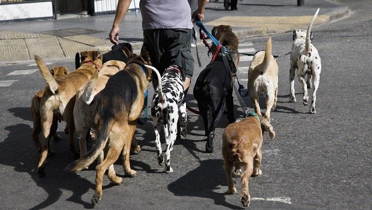 Most Popular Dog Training Methods