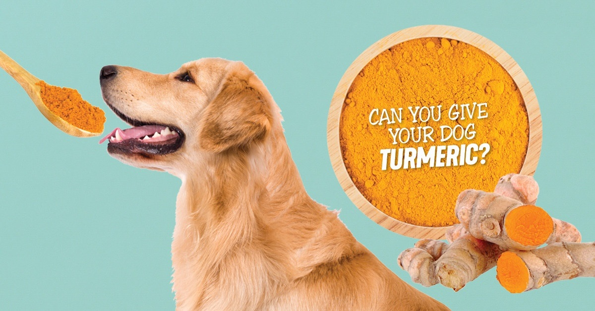 Is Turmeric Safe For Your Pet Dog?