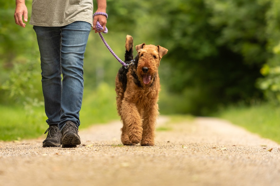 What Should You Carry While Hiking With a Dog