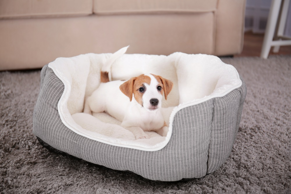 What you should be Aware of Orthopedic Dog Beds before Purchasing It?