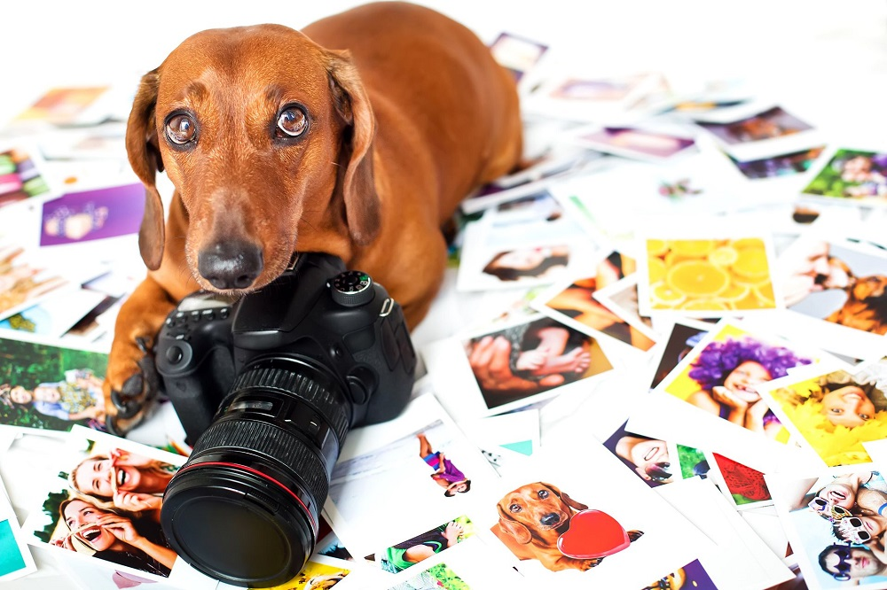 Explore to Learn Why you should go for Professional Pet Photography