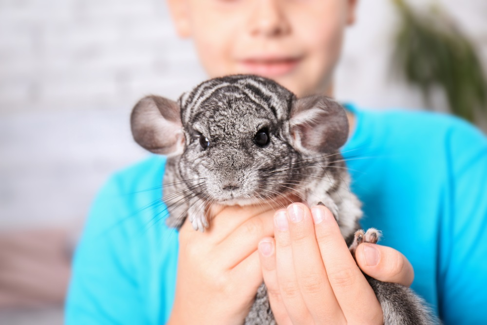 Learn about exotic pets and give good care to them