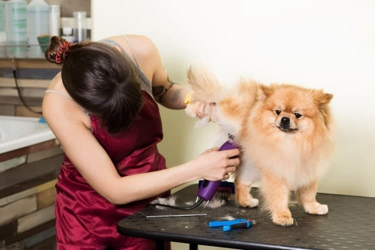 Ease grooming your pet with professional grooming equipments