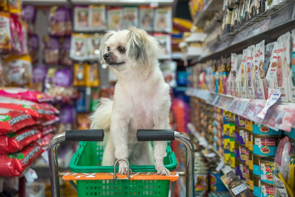 Why Should You Start Preferring Online Pet Stores?