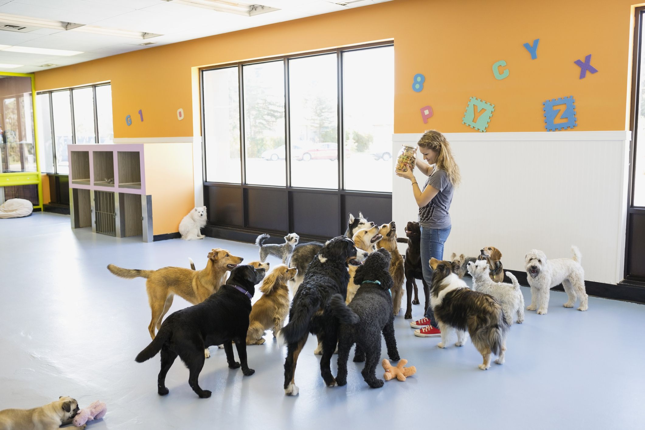 Tips for Finding the Right Doggy Daycare