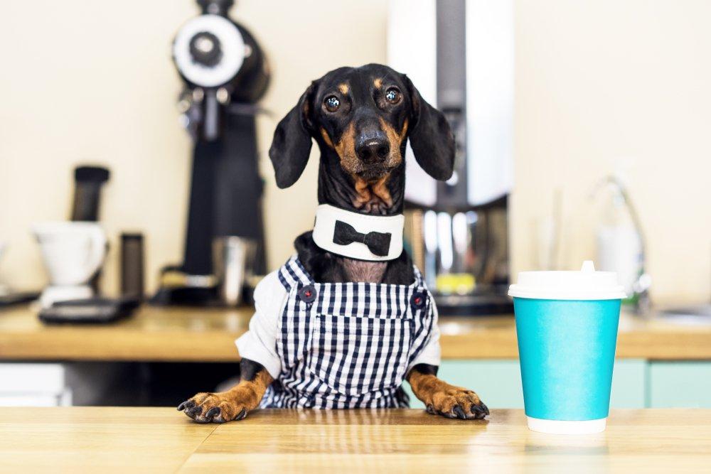 Visit a Dog Café Today!