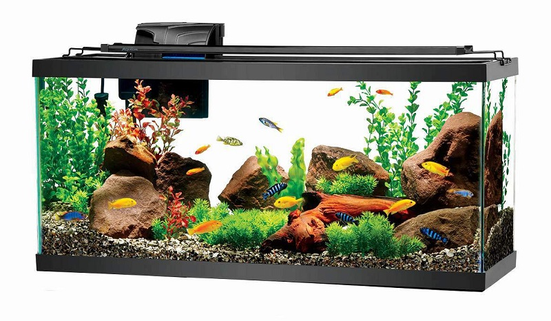 Learn to decorate your aquarium