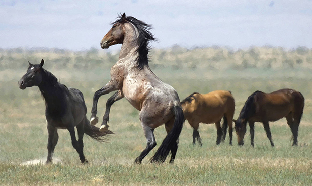 Everything You Need To Know About Arizona Horses
