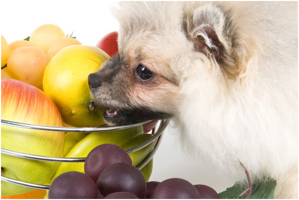 Can Dogs Eat Fruits?