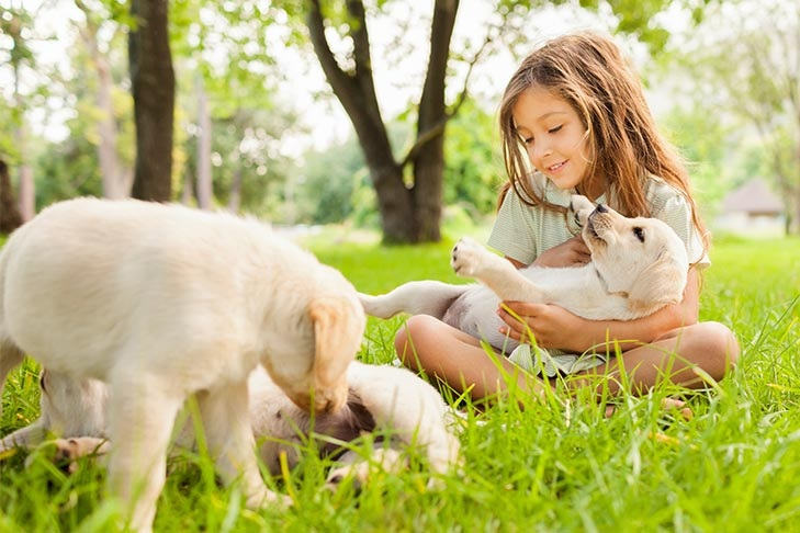 Click To Know The Benefits Of Puppy Socialisation