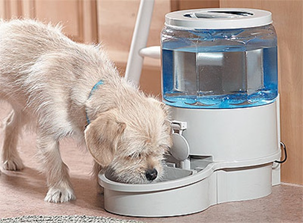 How to Keep Water Readily Available for Your Dog
