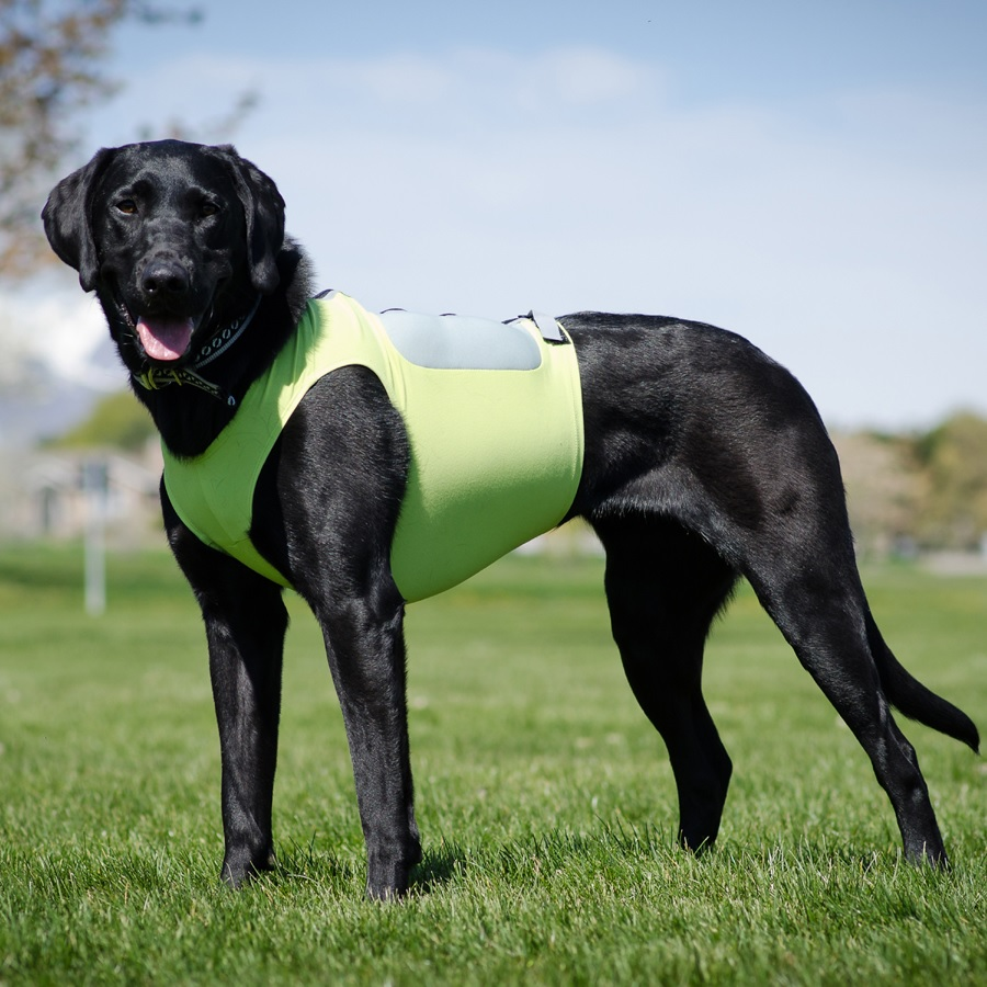 Enhance the Health of Your Dog with The Weighted Animal Vest
