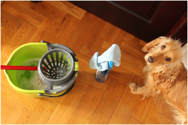 Select from the list of Best Pet Cleaning Products