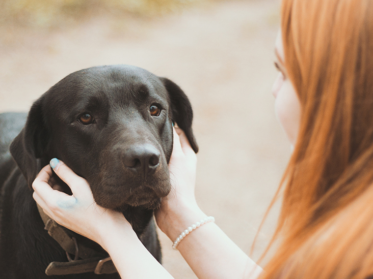 What Are The Signs That Indicate Your Pet Needs Emergency Healthcare?