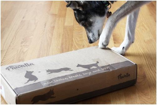 Orthopedic Dog Beds, Does Your Dog Need It?