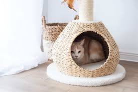 Find Your Choices with the Cat Tree in the Apartments