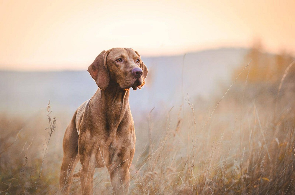 The Best Dog Breed for Hunting You'll Find the Most Useful