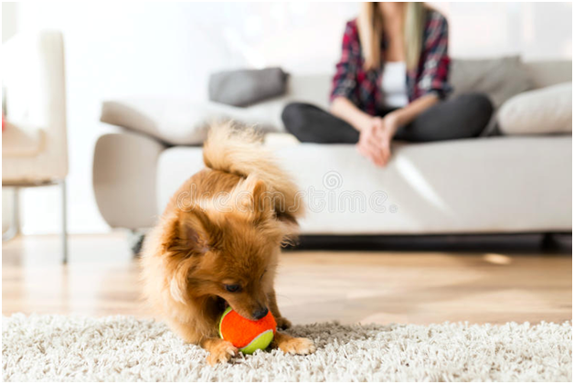 Five indoor games for dogs