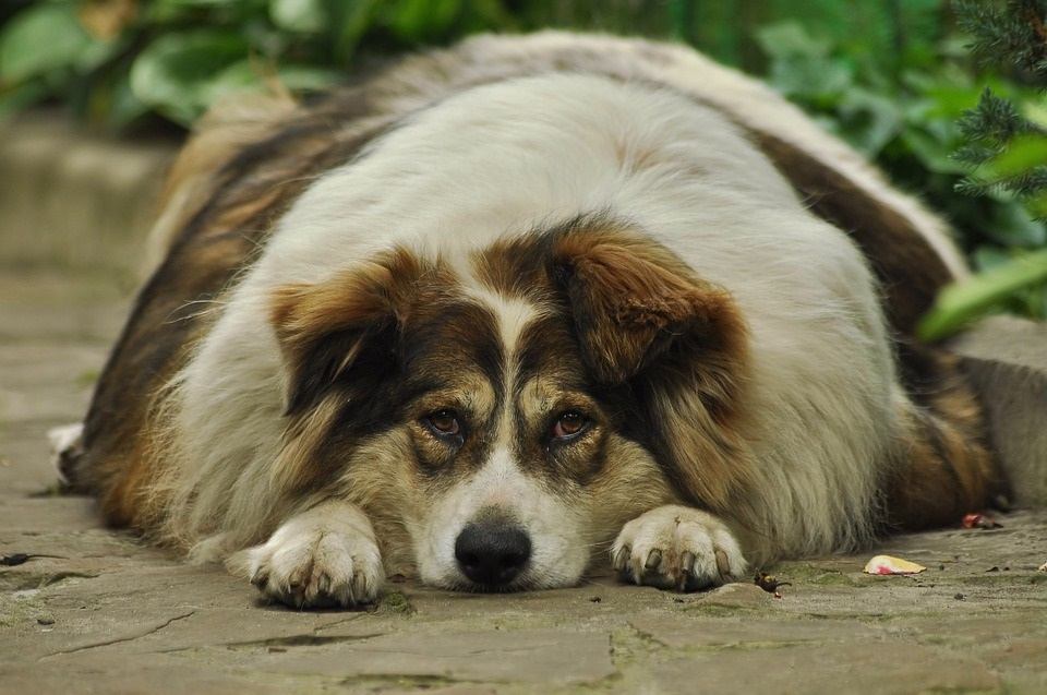 Here's How To Help Your Dog Lose The Pounds And Get A New Lease On Life