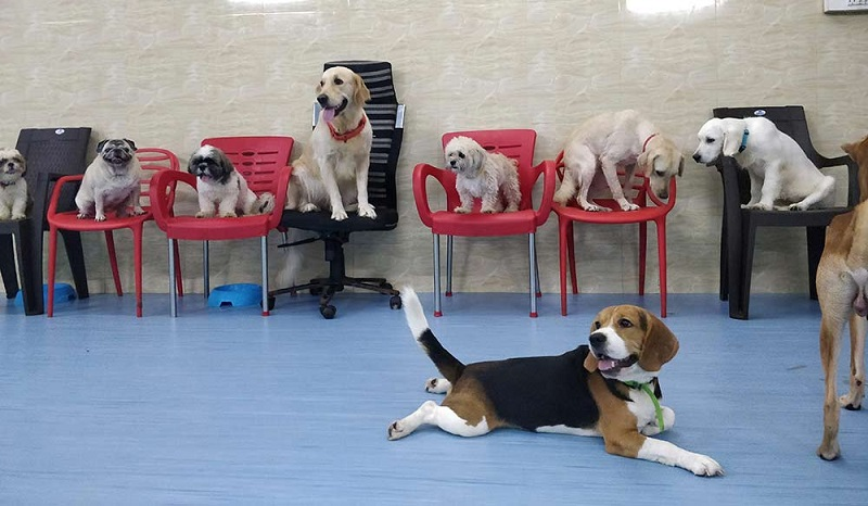 Dog Boarding- The Ultimate Care For Your Dog