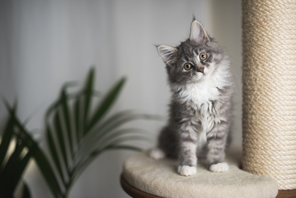 Buyer's Guide for Purchasing Cat Furniture