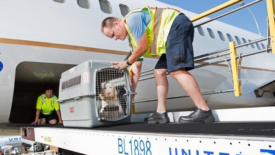 Things to see in a pet transportation company
