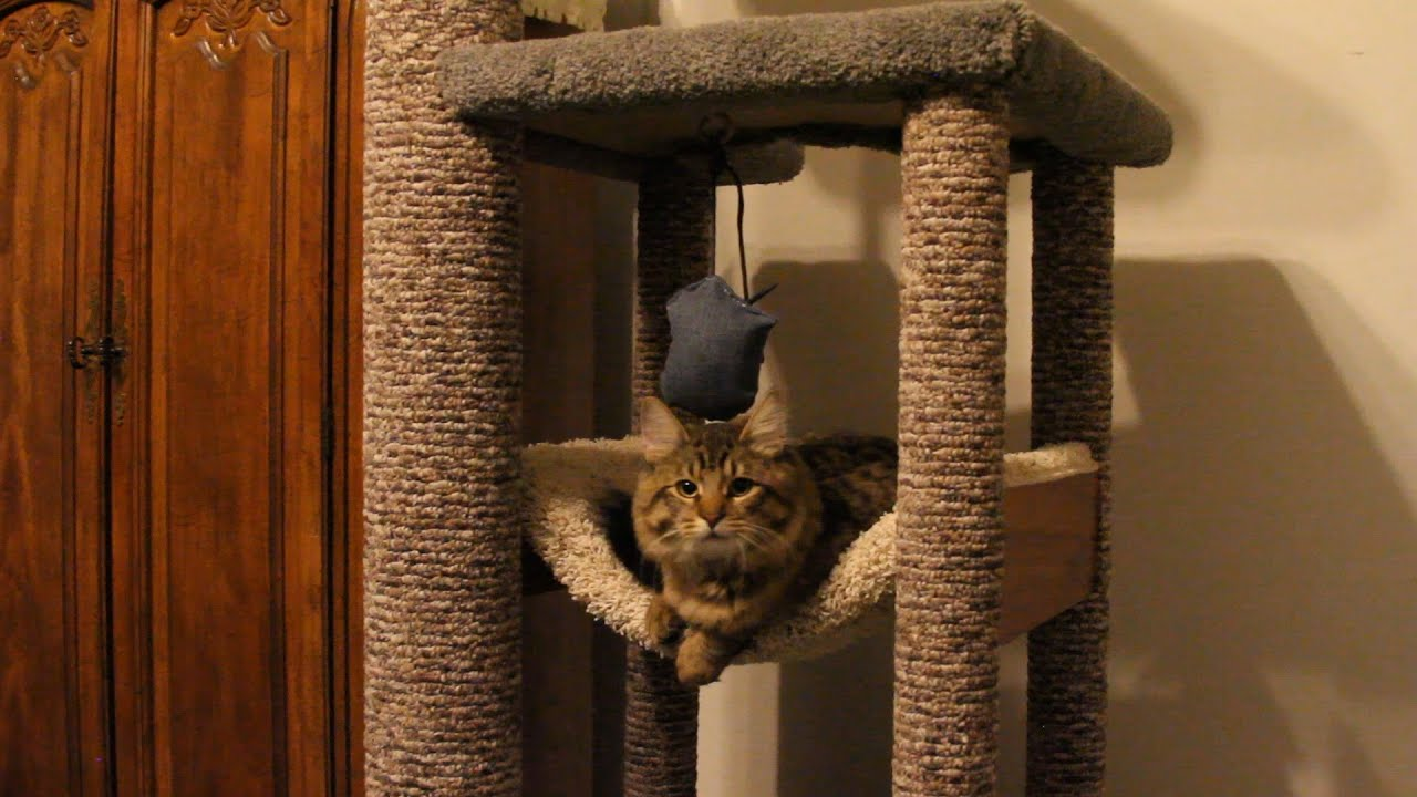 Heavy Duty Cat Tree For Domesticated Cats