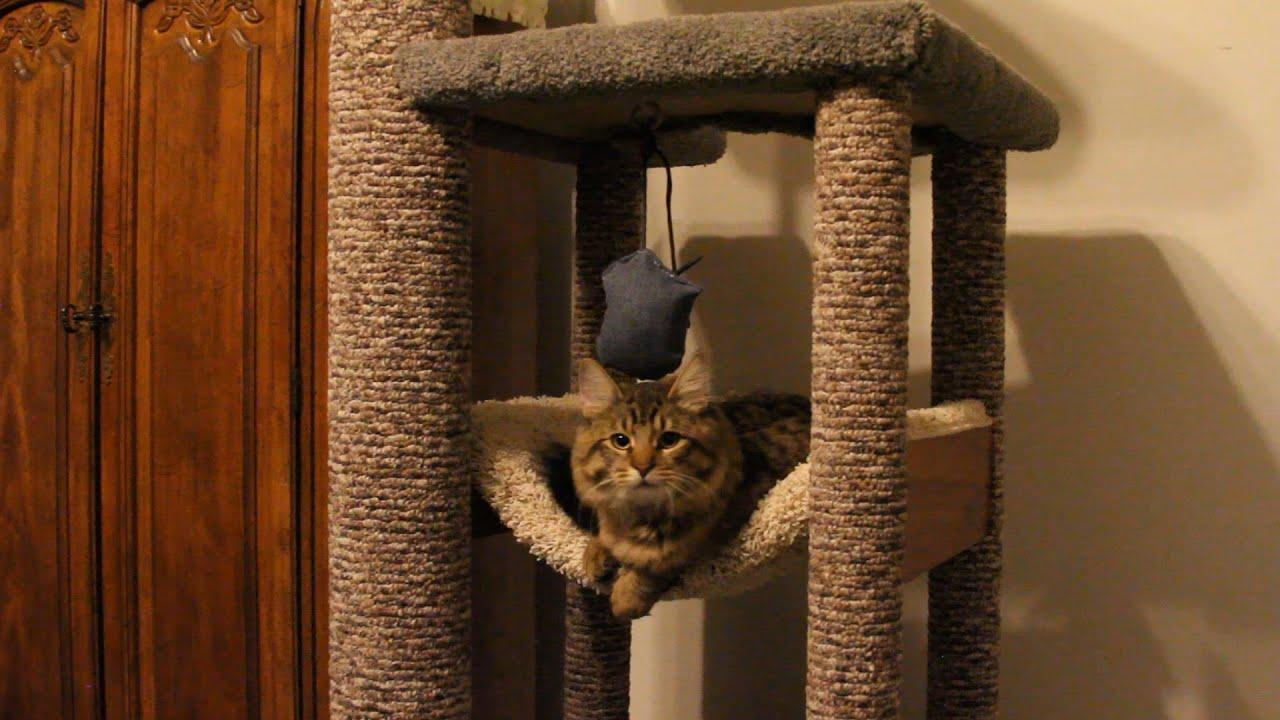 Heavy Duty Cat Tree For Domesticated Cats