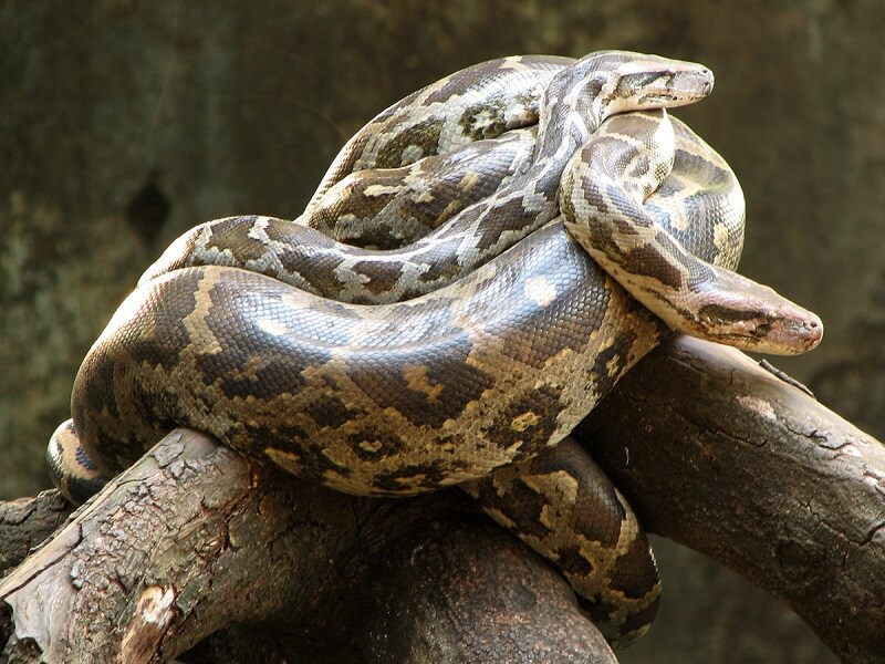 How to Find a Credible Reptile Centre to Buy a Pet Snake