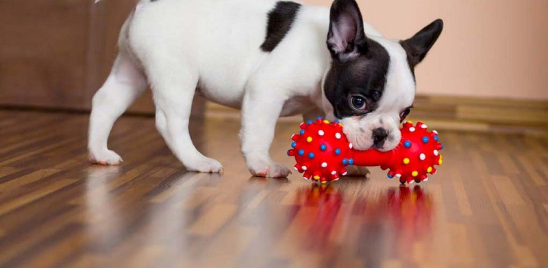 What are the best toys for dogs?