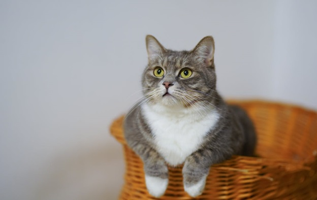 AMAZING TIPS TO KEEP YOUR INDOOR CAT COMFORTABLE
