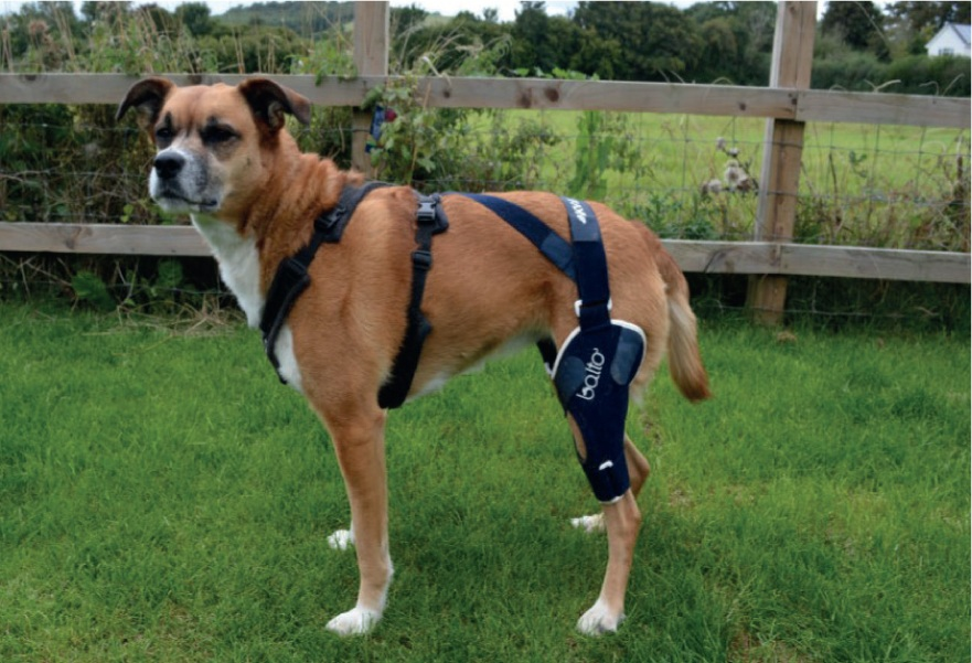 Benefits of Using Balto Braces for Your Dog