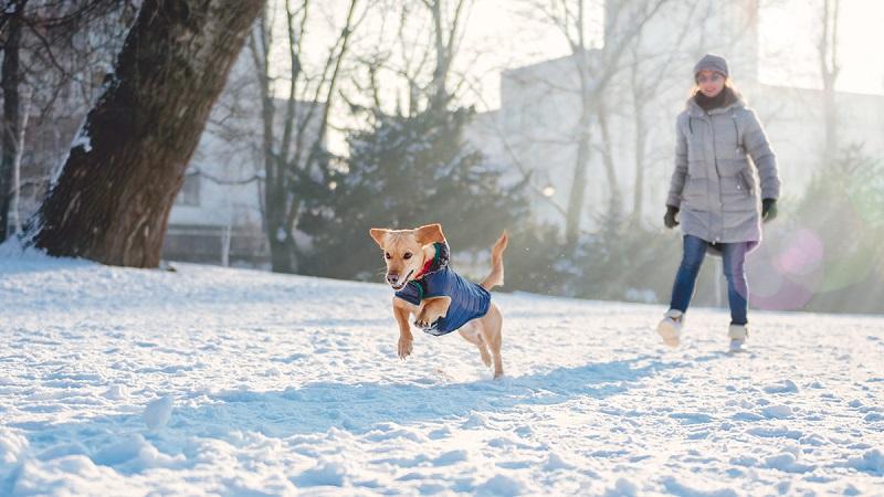 Winter Season Illness you must prepare your pet for