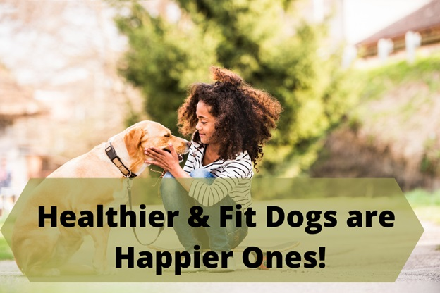 Healthier & fit dogs are happier ones.