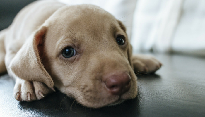 How to Select a Suitable Dog name For your Male Dog?