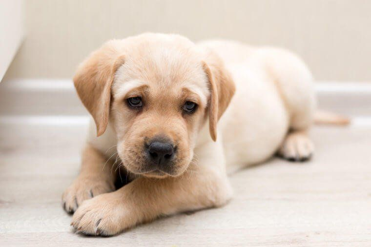 Types of dogs in San Francisco California