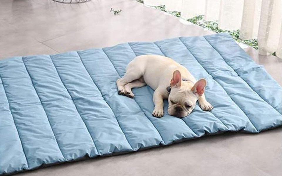 Why You Need Pet Beds: Explore Best Options for Your Pets