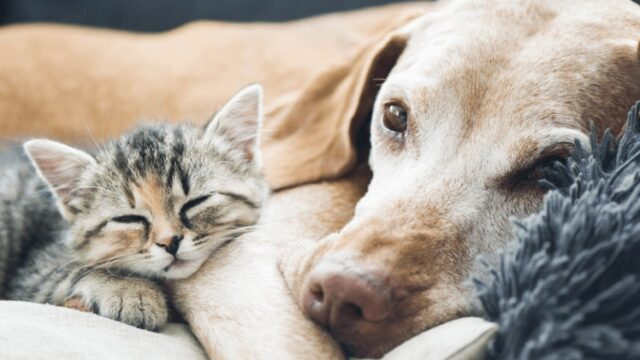 How Can WorldPetExpress Save Your Money on Pet Care?