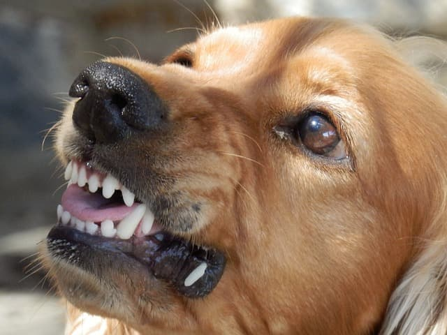 What Triggers a Dog to Act Aggressively