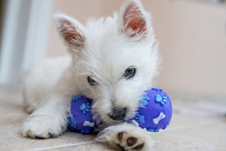 The Toys You MUST Avoid Giving Your Dog